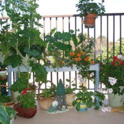 Выращивание декоративных цветов на балконе