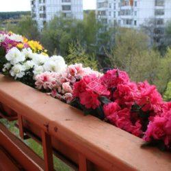 Выращивание цветов на открытом балконе