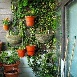 Выращивание декоративных растений на балконе