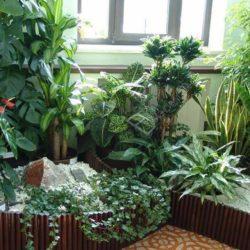 Выращивание растений на балконе и лоджии